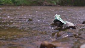 Rzeczny śmieciarski zanieczyszczenie wody strumień kryzysu ekologiczny środowiskowy fotografii zanieczyszczenie zdjęcie wideo