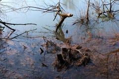 Rzeczny bagno pełno wysuszona trawa i spadać drzewa Obraz Royalty Free