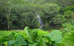 Rzeczny bieg przez bujny zieleni tropikalnego lasu, Kauai, Hawaje, usa zdjęcie royalty free
