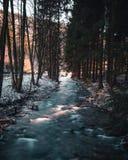 Rzeczny bieg przez lasu zdjęcie stock