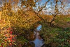 Rzeczny Blyth pod Shilvington mostem obraz royalty free