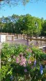 Rzeczny boardwalk obramiający z kwiatami Obraz Royalty Free