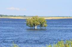 Rzeczny Chobe, Botswana. Zdjęcie Royalty Free