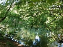 Rzeczny Derwent płynie przez lasu, Yorkshire Obraz Royalty Free