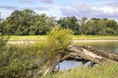 Rzeczny Elbe krajobraz w lecie Część natury reseve Zdjęcie Royalty Free