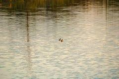 Rzeczny jezioro obrazy royalty free