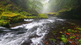 Rzeczny Kamenice w jesieni, czech Szwajcaria zbiory