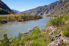 Rzeczny Katun blisko Chemal wioski, Altai, Rosja Zdjęcia Royalty Free