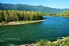 Rzeczny Kucherla, Altai, Rosja, dziki krajobraz Zdjęcie Royalty Free