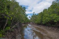Rzeczny Namorzynowy las przy Pranburi Lasowym parkiem narodowym, Prachuap Khiri Khan, Tajlandia obraz stock