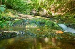 Rzeczny omijanie przez skał w zieleni forrest fotografia stock