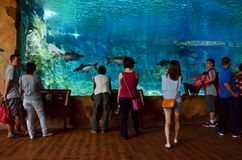 Rzeczny safari akwarium Zdjęcia Royalty Free