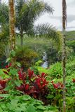 Rzeczny spływanie wśród luksusowej tropikalnej roślinności, rośliien i drzew, Kauai, Hawaje, usa fotografia stock