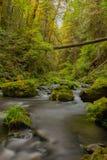 Rzeczny spływanie przez luksusowego lasu tropikalnego Fotografia Royalty Free