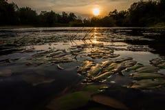 Rzeczny wiejski krajobraz piękny zachód słońca Obrazy Stock