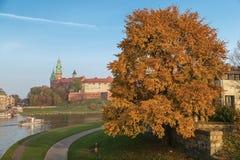 Rzeczny Wisla Wawel wzgórze i pstrobarwny drzewo Obrazy Royalty Free
