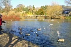 Rzeczny Wye, Bakewell, Derbyshire zdjęcia royalty free