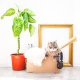 Rzeczy ruszać się, kot w pudełku, kwiat w garnku, stara rama na białej tło garażu sprzedaży i poruszająca pojęcie kopii przestrze Obrazy Royalty Free