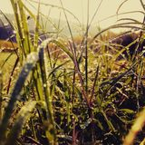 Rzeczywistość natura w wioskach w rankach i obraz stock