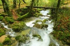 rzeka. Obrazy Stock