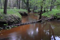 Rzeka Stockfoto