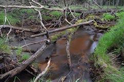 Rzeka Stockbild