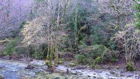 Rzeka Aude i Pyrenean las, Francja zbiory