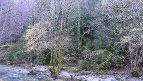 Rzeka Aude i Pyrenean las, Francja zdjęcie wideo