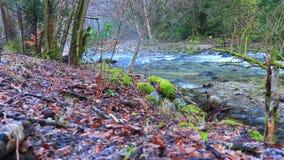 Rzeka Aude w Pyrenean lesie, Francja zdjęcie wideo