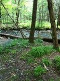 rzeka bieżąca Obraz Stock