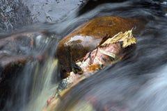 rzeka bieżąca Zdjęcie Royalty Free