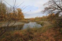 Rzeka biega Obraz Royalty Free