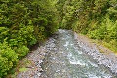 Rzeka biega skalistego riverbed, swój bank linia z miejscowego Nowa Zelandia lasem zdjęcie royalty free