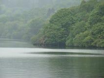 Rzeka boczny las Fotografia Royalty Free
