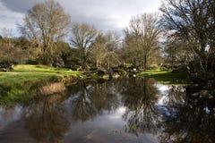 rzeka drzewa Zdjęcia Royalty Free