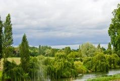rzeka drzewa obraz royalty free
