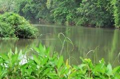 rzeka drzewa fotografia royalty free