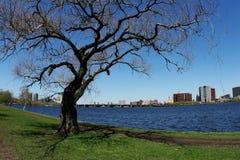 rzeka drzewo zdjęcia stock