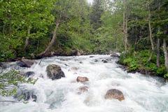 rzeka dzika Fotografia Royalty Free