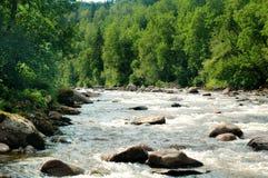rzeka dzika Obraz Royalty Free