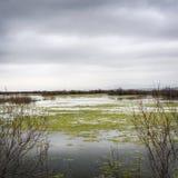 Rzeka Evros w jesieni zdjęcia stock