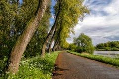 Rzeka i drzewa Fotografia Stock