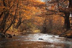 Rzeka i drzewa w jesieni Obrazy Royalty Free