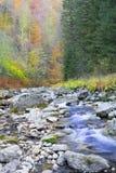 Rzeka i jesieni drzewo Piękny krajobraz Zdjęcia Stock