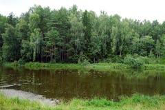 Rzeka i las zdjęcie royalty free