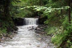 Rzeka i las obraz royalty free