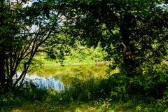 Rzeka i swój banki Drzewa wzdłuż obich stron woda Niebo jest chmurny Zdjęcie Royalty Free
