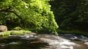 Rzeka i zieleń malujący klon zbiory wideo