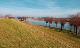 Rzeka IJssel i zwierzęcia bezrogiego wierzby w holandiach zdjęcia royalty free