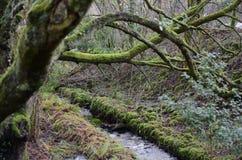 rzeka ireland Fotografia Royalty Free